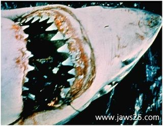 1975_jaws_003