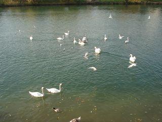 2010 birds