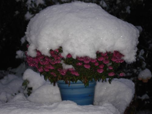 2010 snow on flowers